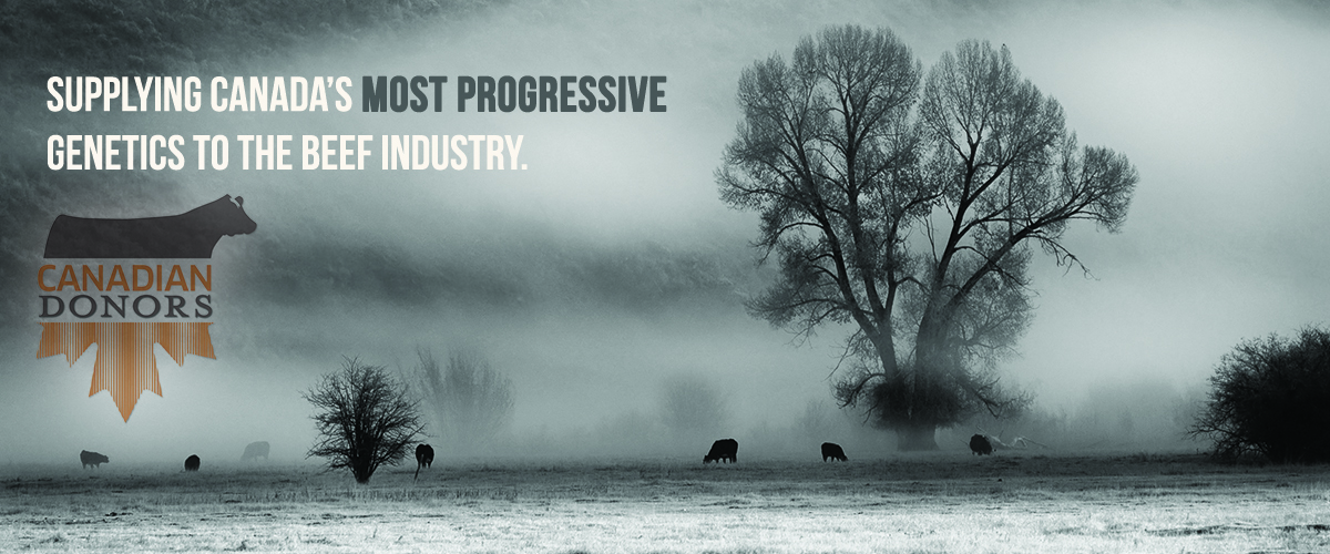 Supplying Canada's Most Progressive Genetics to the Beef Industry.